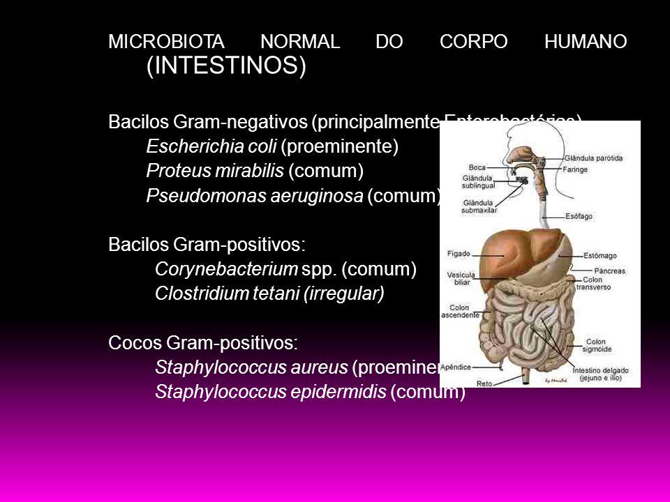 MICROBIOTA NORMAL DO CORPO HUMANO (INTESTINOS) Bacilos Gram-negativos (principalmente Enterobactérias) Escherichia coli (proeminente) Proteus mirabili