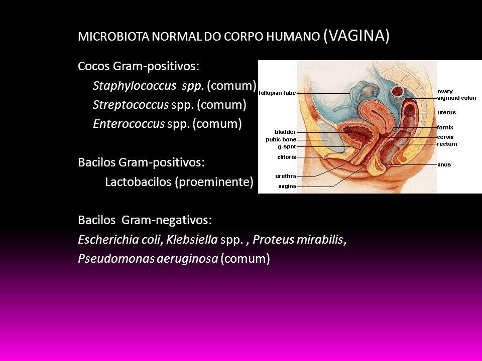 MICROBIOTA NORMAL DO CORPO HUMANO (VAGINA) Cocos Gram-positivos: Staphylococcus spp. (comum) Streptococcus spp. (comum) Enterococcus spp. (comum) Baci