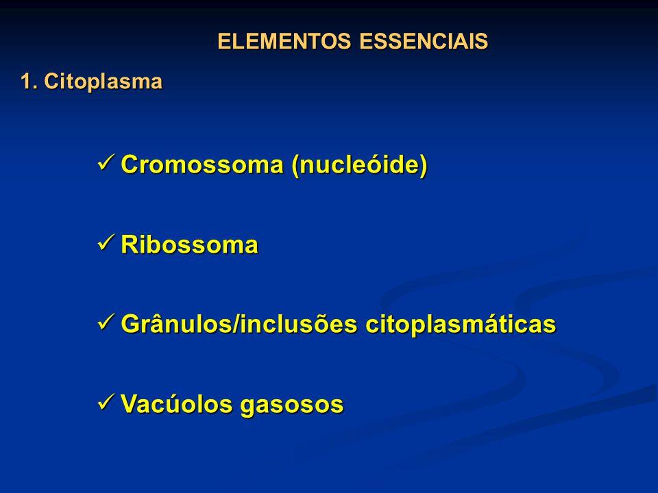 Cromossoma (nucleóide) Cromossoma (nucleóide) Ribossoma Ribossoma Grânulos/inclusões citoplasmáticas Grânulos/inclusões citoplasmáticas Vacúolos gasos