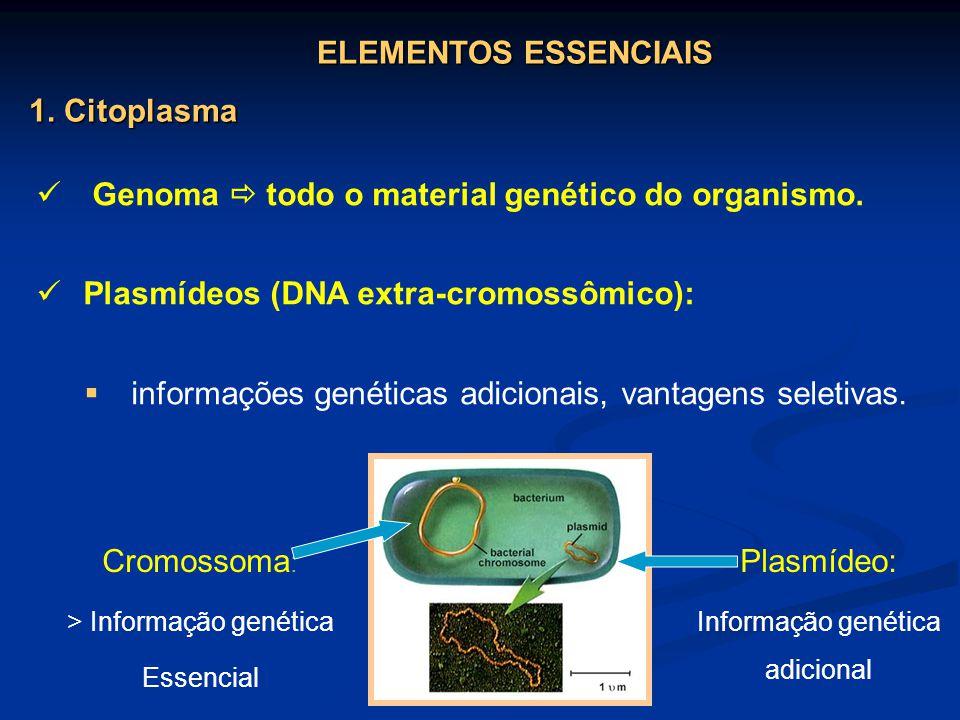 Genoma todo o material genético do organismo. Plasmídeos (DNA extra-cromossômico): informações genéticas adicionais, vantagens seletivas. Cromossoma :