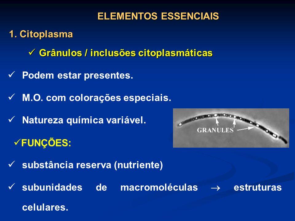 Grânulos / inclusões citoplasmáticas Grânulos / inclusões citoplasmáticas Podem estar presentes. M.O. com colorações especiais. Natureza química variá