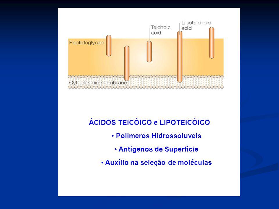 ÁCIDOS TEICÓICO e LIPOTEICÓICO Polimeros Hidrossoluveis Antígenos de Superfície Auxílio na seleção de moléculas
