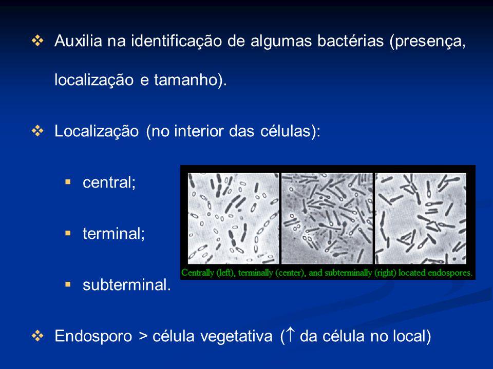 Auxilia na identificação de algumas bactérias (presença, localização e tamanho). Localização (no interior das células): central; terminal; subterminal
