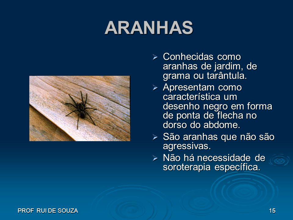 PROF RUI DE SOUZA15 ARANHAS ARANHAS Conhecidas como aranhas de jardim, de grama ou tarântula. Conhecidas como aranhas de jardim, de grama ou tarântula