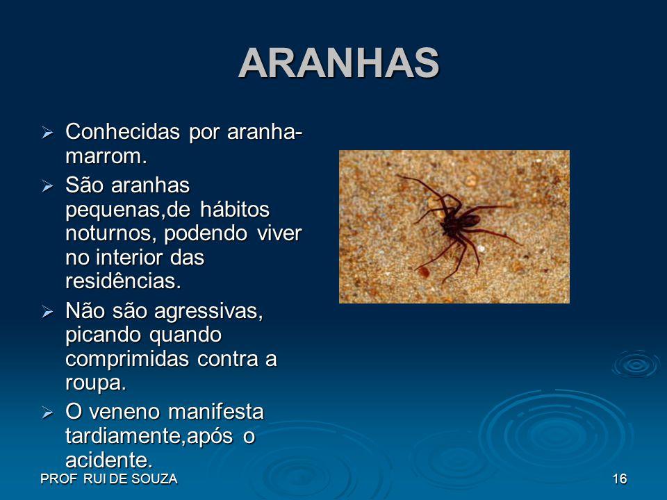 PROF RUI DE SOUZA16 ARANHAS ARANHAS Conhecidas por aranha- marrom. Conhecidas por aranha- marrom. São aranhas pequenas,de hábitos noturnos, podendo vi