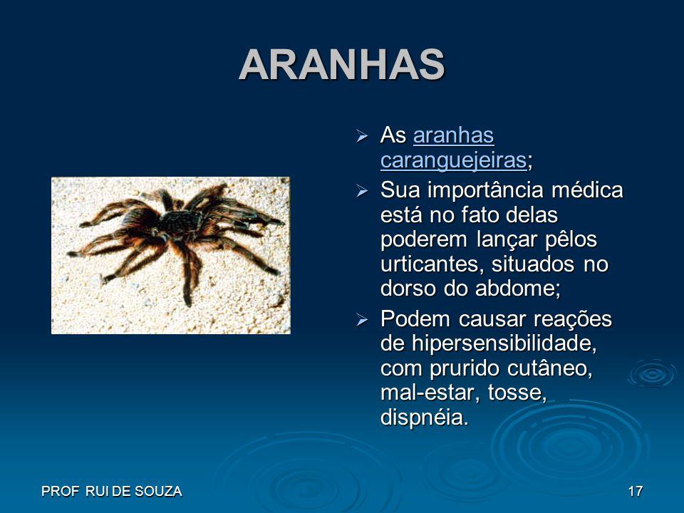 PROF RUI DE SOUZA17 ARANHAS As aranhas caranguejeiras; As aranhas caranguejeiras;aranhas caranguejeirasaranhas caranguejeiras Sua importância médica e