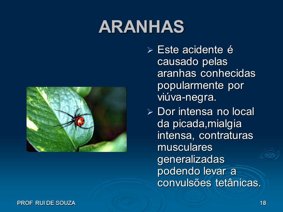 PROF RUI DE SOUZA18 ARANHAS Este acidente é causado pelas aranhas conhecidas popularmente por viúva-negra. Este acidente é causado pelas aranhas conhe