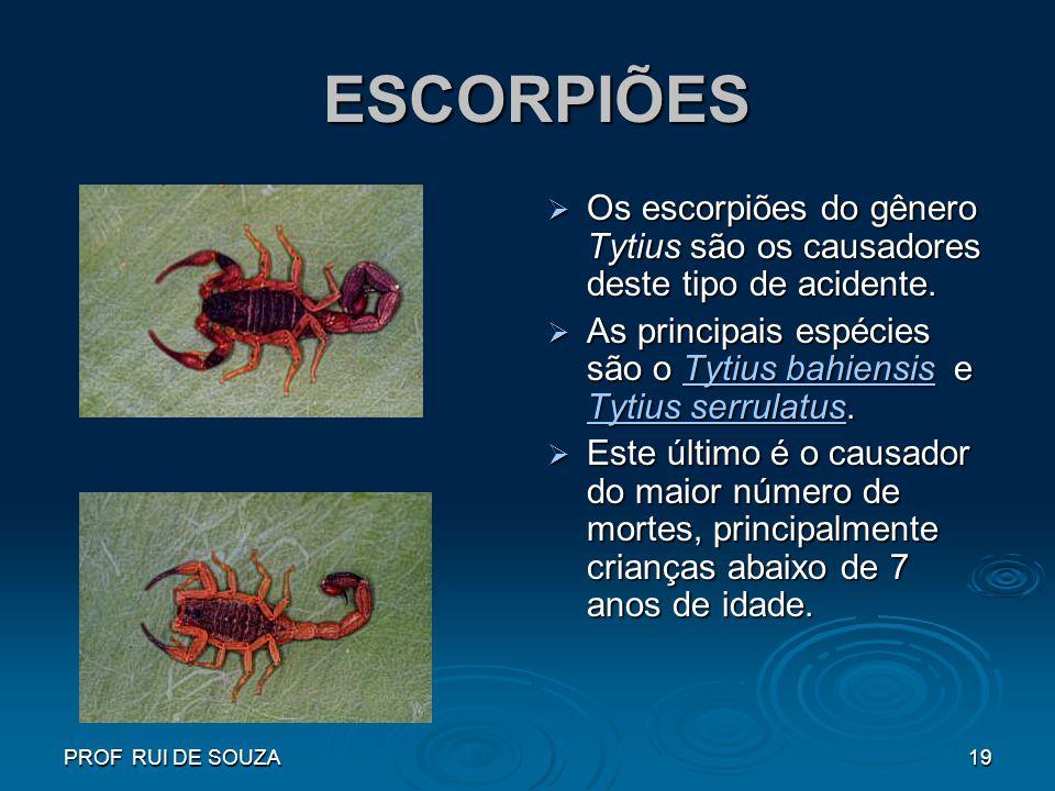 PROF RUI DE SOUZA19 ESCORPIÕES ESCORPIÕES Os escorpiões do gênero Tytius são os causadores deste tipo de acidente. Os escorpiões do gênero Tytius são