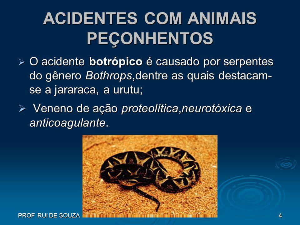 PROF RUI DE SOUZA4 ACIDENTES COM ANIMAIS PEÇONHENTOS O acidente botrópico é causado por serpentes do gênero Bothrops,dentre as quais destacam- se a ja