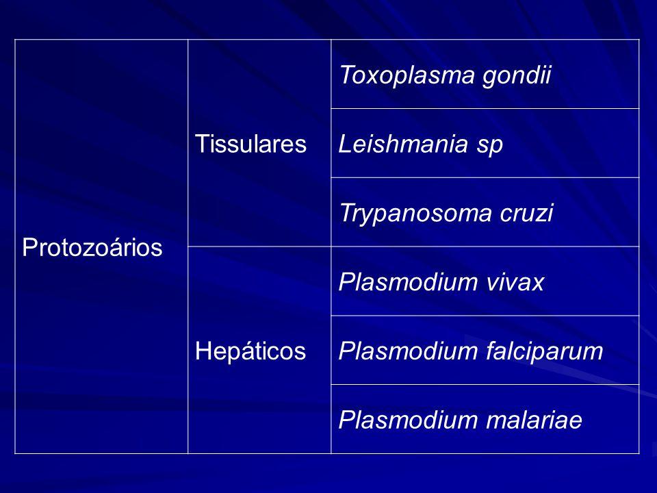 Trypanosoma cruzi Introdução –Protozoário flagelado –Polimórfico –Agente etiológico da Doença de Chagas –Descoberto pelo pesquisador mineiro (Oliveira, MG) Dr.