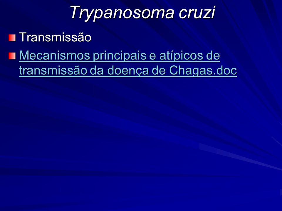 Trypanosoma cruzi Transmissão Mecanismos principais e atípicos de transmissão da doença de Chagas.doc Mecanismos principais e atípicos de transmissão