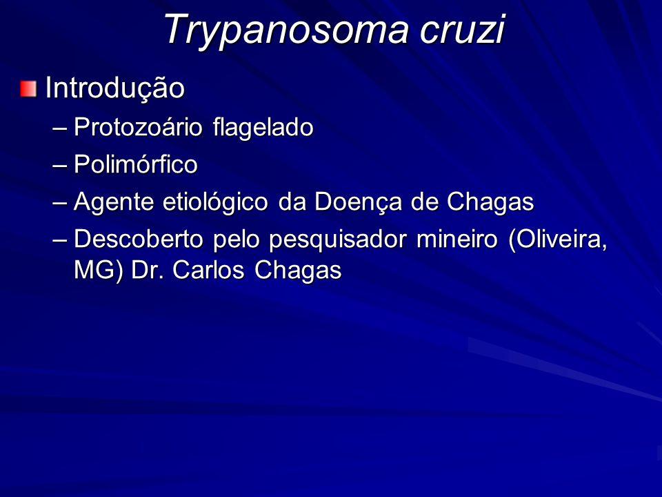 Trypanosoma cruzi Ciclo Biológico –Heteroxeno Hospedeiro vertebrado (humano e outros animais) fase de multiplicação intracelular Hospedeiro invertebrado (Triatomíneo) fase de multiplicação extracelular