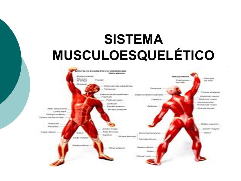 SISTEMA MUSCULAR CONCEITO Miologia estuda os músculos Mio= músculo É formado pelo conjunto de músculos do nosso corpo As células musculares são responsáveis pela contração e relaxamento muscular Elas se agrupam em feixes para formar o músculo