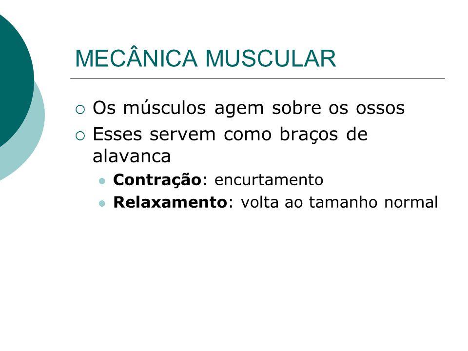 MECÂNICA MUSCULAR Os músculos agem sobre os ossos Esses servem como braços de alavanca Contração: encurtamento Relaxamento: volta ao tamanho normal