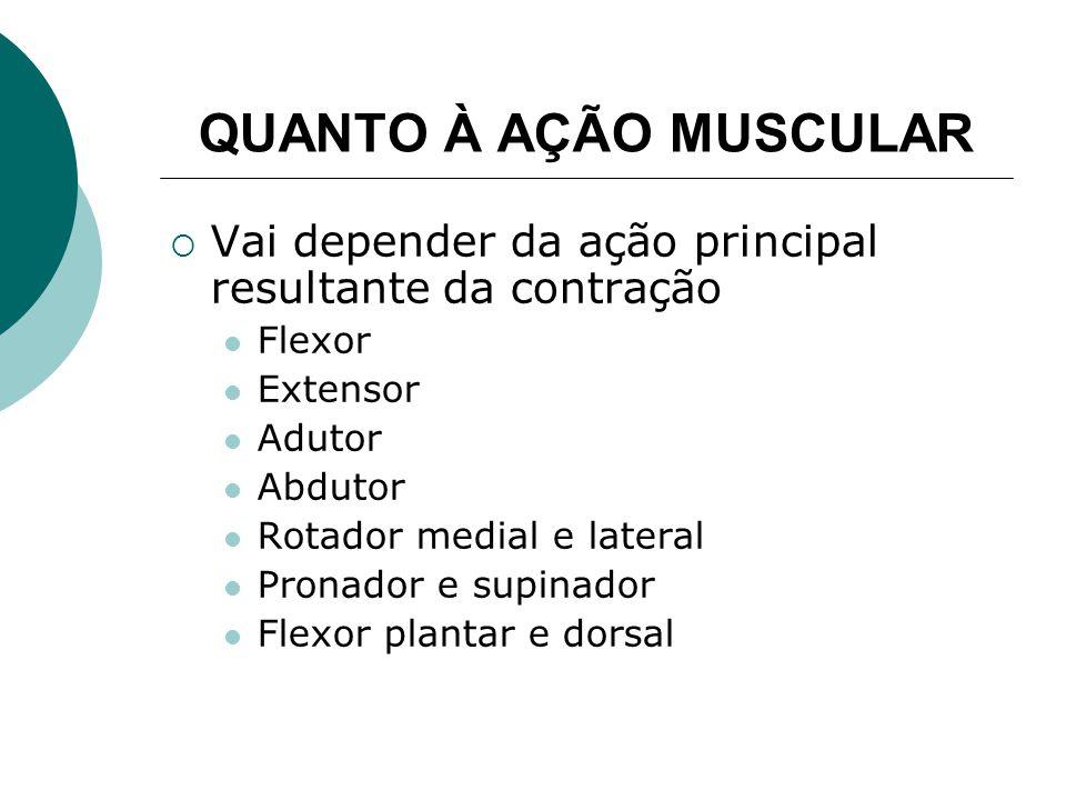 QUANTO À AÇÃO MUSCULAR Vai depender da ação principal resultante da contração Flexor Extensor Adutor Abdutor Rotador medial e lateral Pronador e supinador Flexor plantar e dorsal