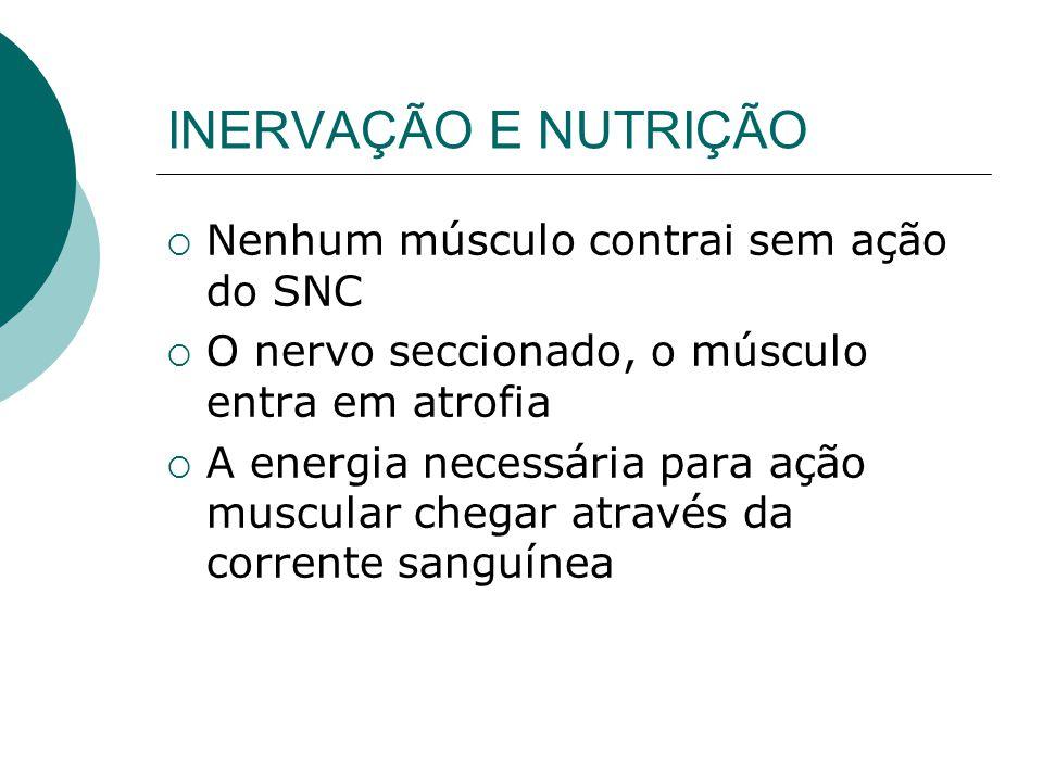 INERVAÇÃO E NUTRIÇÃO Nenhum músculo contrai sem ação do SNC O nervo seccionado, o músculo entra em atrofia A energia necessária para ação muscular chegar através da corrente sanguínea