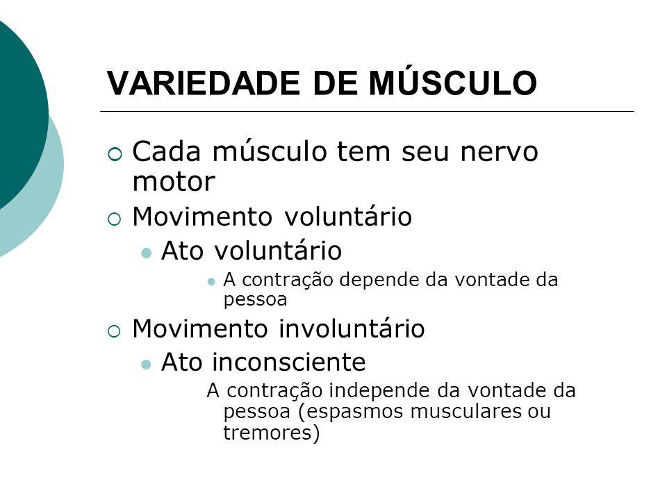 VARIEDADE DE MÚSCULO Músculo voluntário Presença de estriações transversais Músculo estriado cardíaco Músculo estriado esquelético Músculo involuntário Ausência de estriações Órgãos internos, aparelho reprodutor, grandes vasos sanguíneos e aparelho excretor Sistema nervoso vegetativo