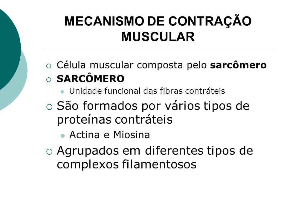 MECANISMO DE CONTRAÇÃO MUSCULAR Esquema do sarcômero Sarcômero na visão muscular