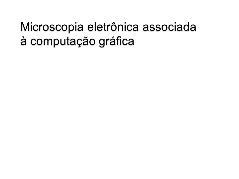 Microscopia eletrônica associada à computação gráfica