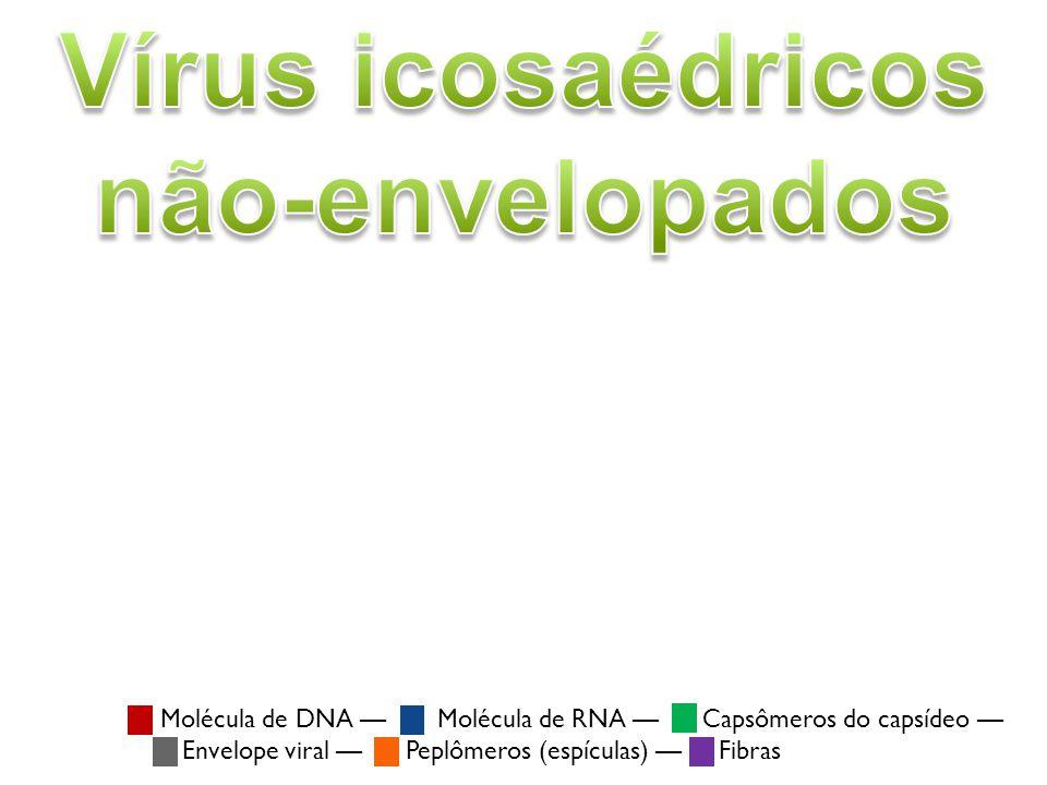 Vírus icosaédricos não-envelopados Vírus do papiloma humano Vírus do papiloma humano (HPV) (família: Papillomaviridae)Papillomaviridae Vírus icosaédricos não-envelopados estão entre os mais comuns.