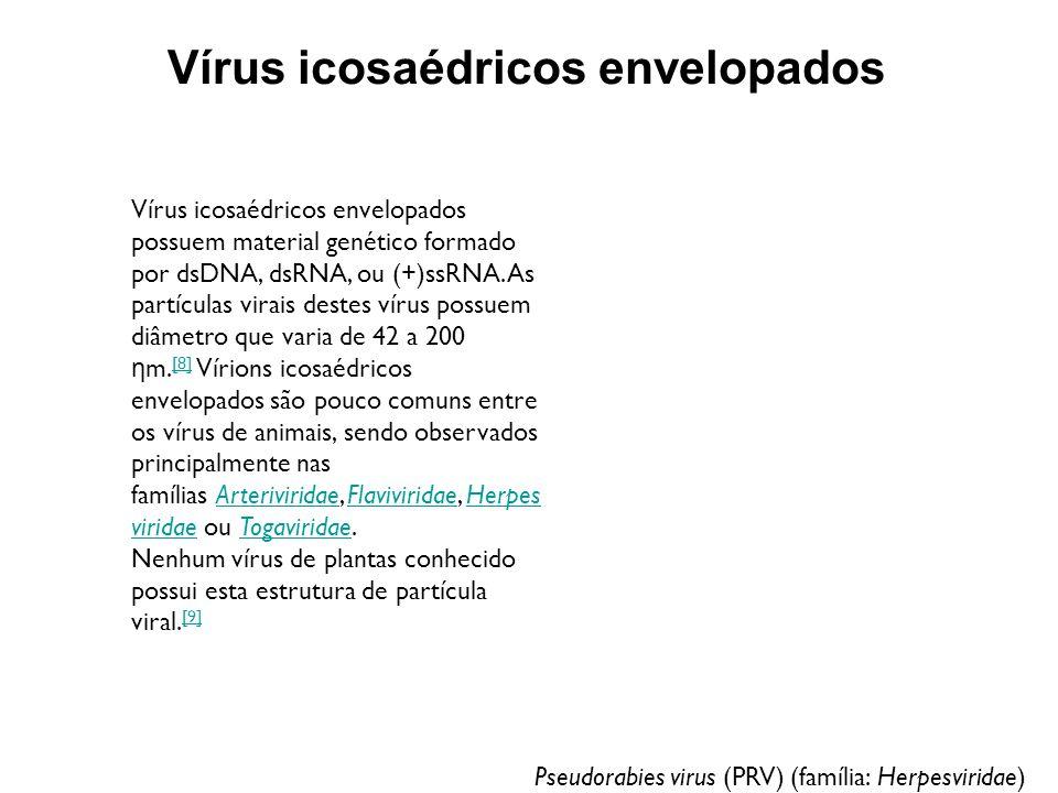 Vírus icosaédricos envelopados Pseudorabies virus (PRV) (família: Herpesviridae) Vírus icosaédricos envelopados possuem material genético formado por