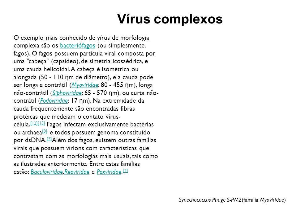 BACTÉRIAS VÍRUS Bactérias típicas Riquétsias / Clamídias Parasita intracelular -++ Membrana plasmática ++- Fissão binária ++- Passagem através de filtros bacteriológicos -- / ++ DNA e RNA em ambos ++- Metabolismo de geração de ATP ++ / -- Ribossomos ++- Sensíveis a antibióticos ++- Sensíveis a interferons --+