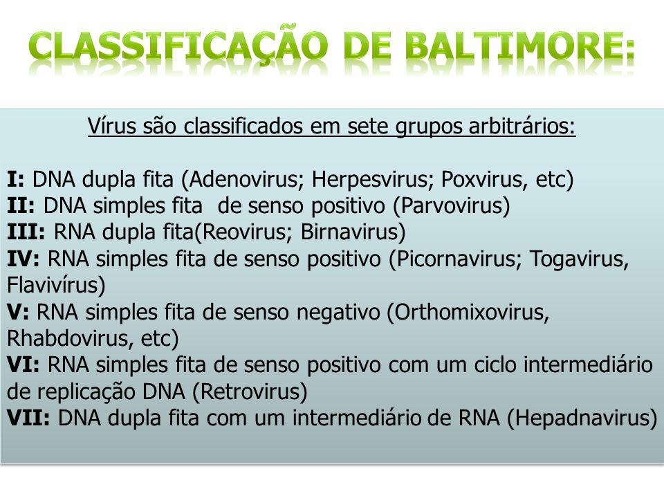Vírus são classificados em sete grupos arbitrários: I: DNA dupla fita (Adenovirus; Herpesvirus; Poxvirus, etc) II: DNA simples fita de senso positivo