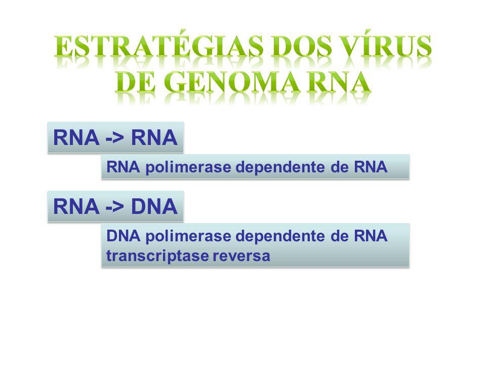 RNA -> RNA RNA polimerase dependente de RNA RNA -> DNA DNA polimerase dependente de RNA transcriptase reversa DNA polimerase dependente de RNA transcr
