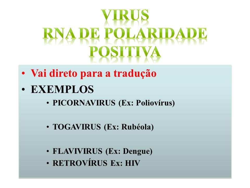 Vai direto para a tradução EXEMPLOS PICORNAVIRUS (Ex: Poliovírus) TOGAVIRUS (Ex: Rubéola) FLAVIVIRUS (Ex: Dengue) RETROVÍRUS Ex: HIV Vai direto para a