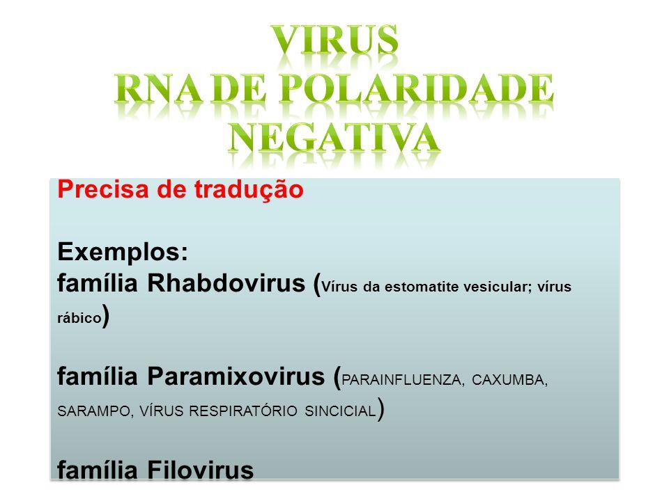 Precisa de tradução Exemplos: família Rhabdovirus ( Vírus da estomatite vesicular; vírus rábico ) família Paramixovirus ( PARAINFLUENZA, CAXUMBA, SARA