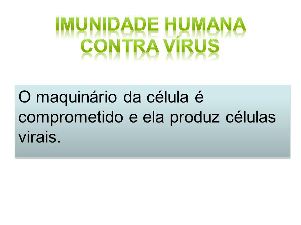 O maquinário da célula é comprometido e ela produz células virais.