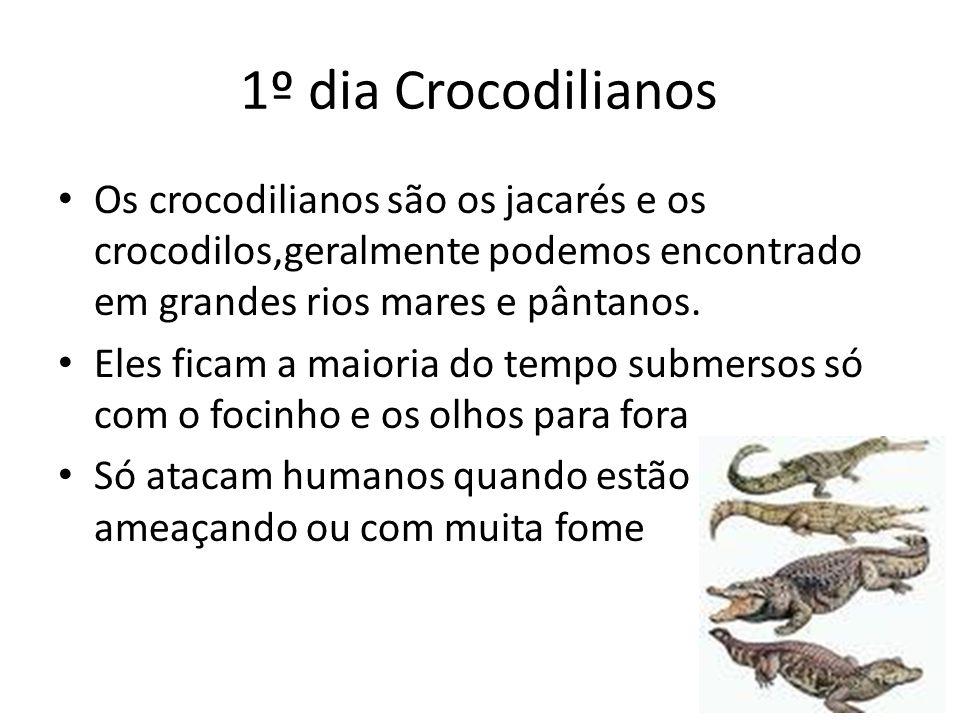 1º dia Crocodilianos Os crocodilianos são os jacarés e os crocodilos,geralmente podemos encontrado em grandes rios mares e pântanos. Eles ficam a maio