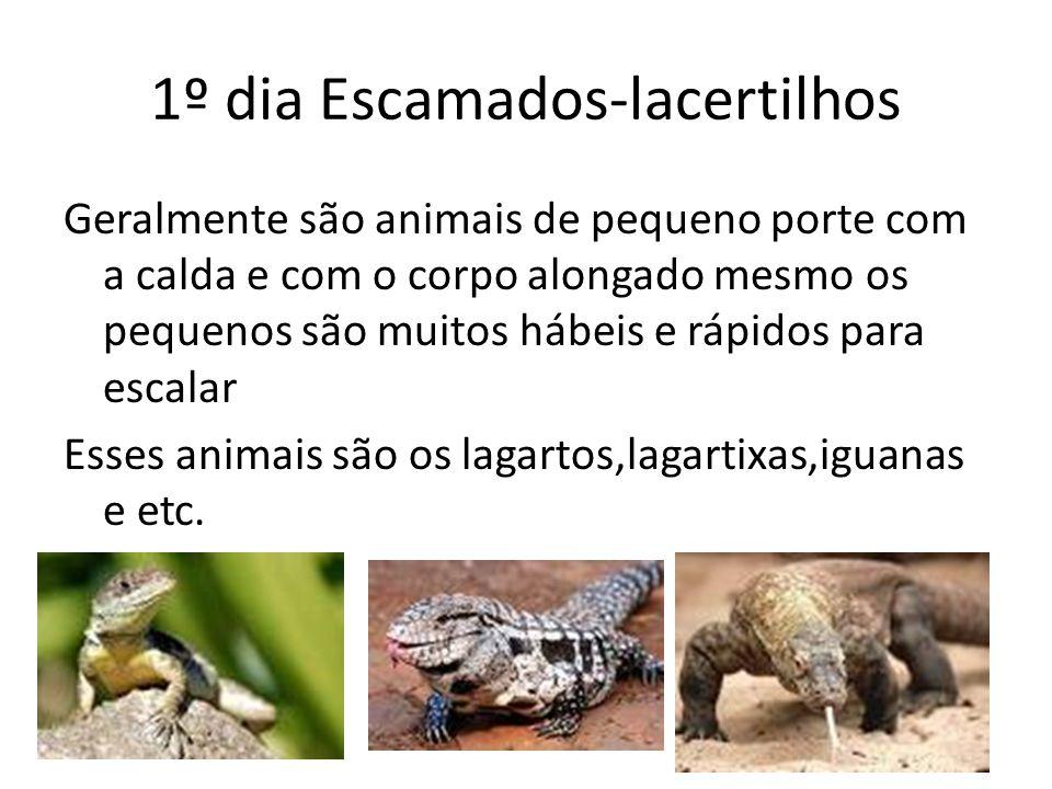1º dia Escamados-lacertilhos Geralmente são animais de pequeno porte com a calda e com o corpo alongado mesmo os pequenos são muitos hábeis e rápidos