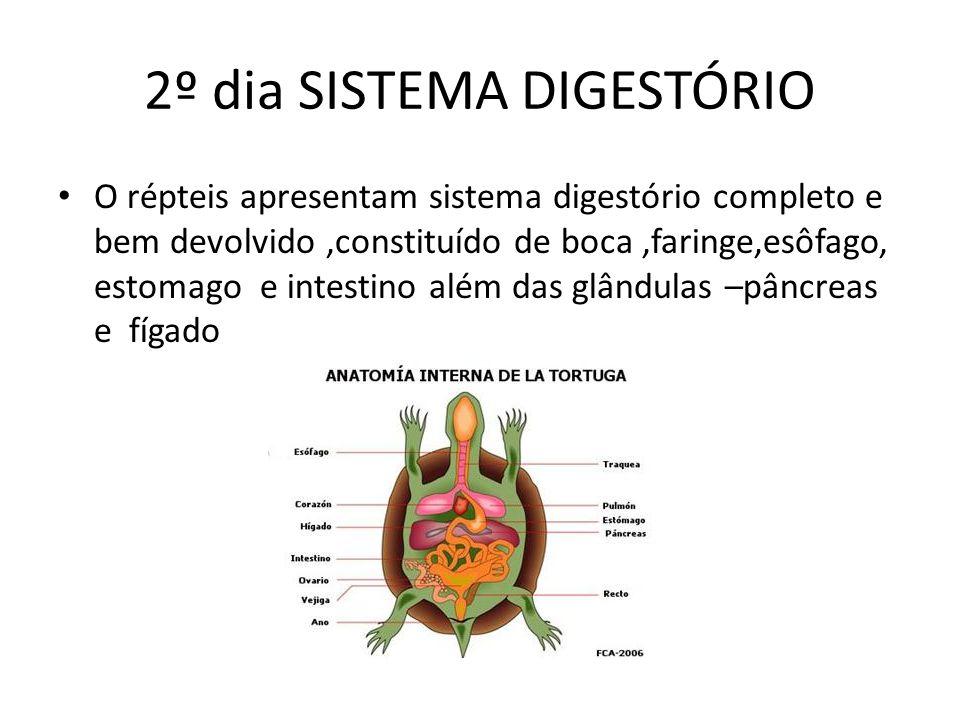 2º dia SISTEMA DIGESTÓRIO O répteis apresentam sistema digestório completo e bem devolvido,constituído de boca,faringe,esôfago, estomago e intestino a
