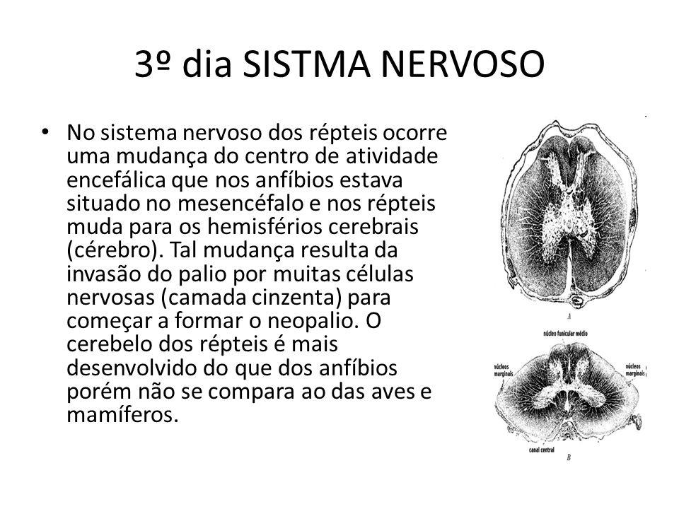 3º dia SISTMA NERVOSO No sistema nervoso dos répteis ocorre uma mudança do centro de atividade encefálica que nos anfíbios estava situado no mesencéfa
