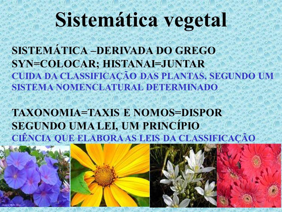 SISTEMA DE CLASSIFICAÇÃO Compreender o mundo que o cerca Antigüidade – reconhecer os tipos de plantas que eram úteis (alimentícias, medicinais, venenosas) Diferentes sistemas de classificação (ao longo da História) 4 categorias