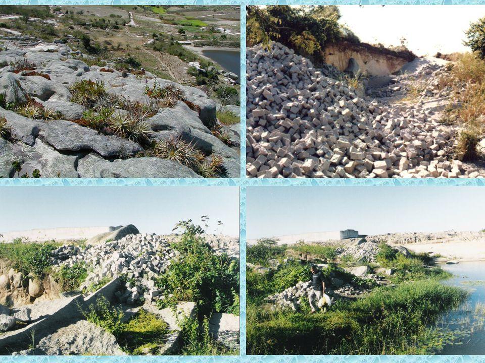 Nomenclatura Botânica Caesalpinia echinata L.a. nome do gênero b.