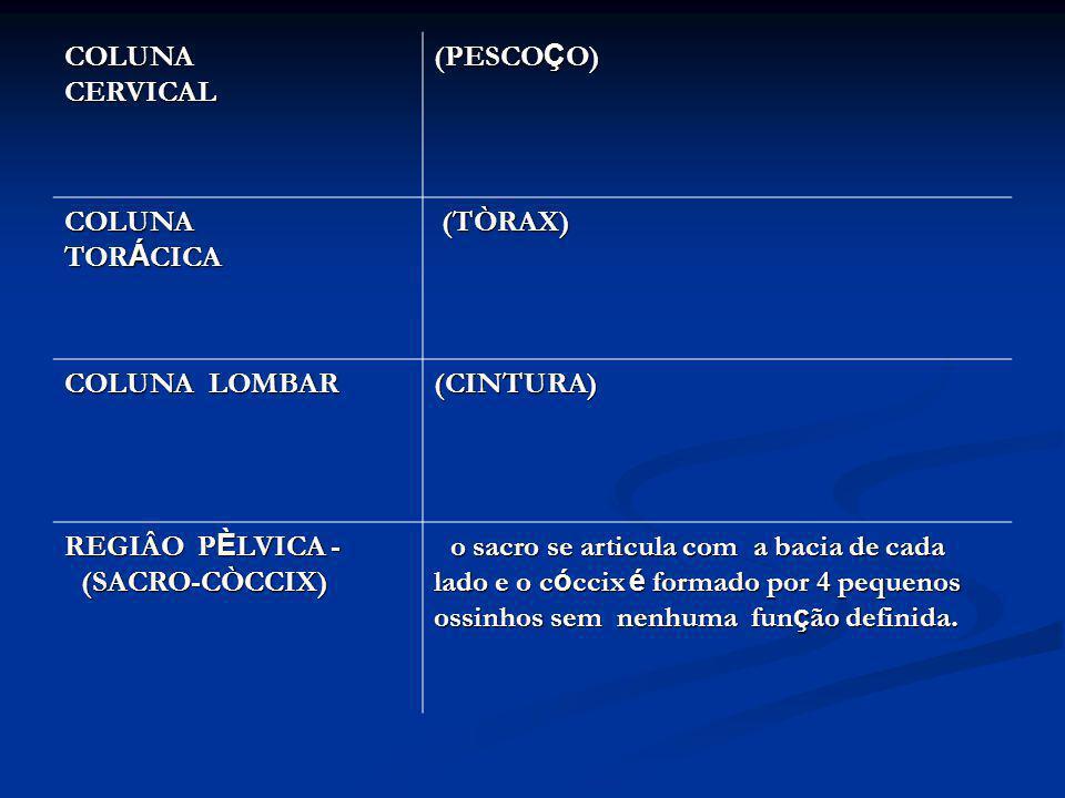 COLUNA CERVICAL COLUNA CERVICAL (PESCO Ç O) COLUNA TOR Á CICA (TÒRAX) (TÒRAX) COLUNA LOMBAR (CINTURA) REGIÂO P È LVICA - (SACRO-CÒCCIX) o sacro se art