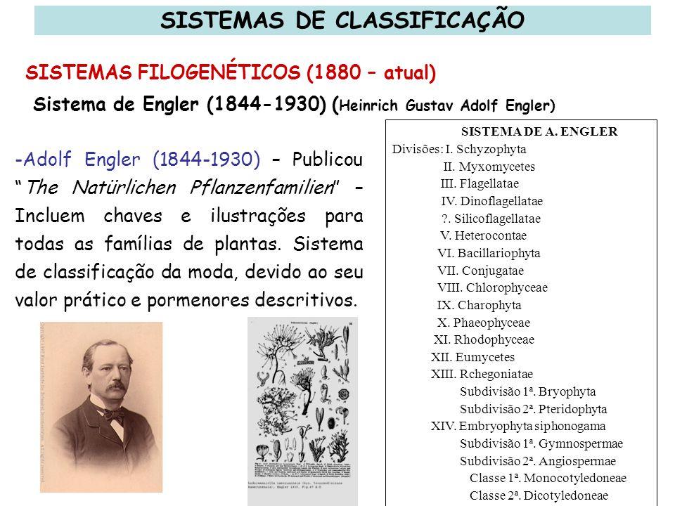 Charles Edwin Bessey (1845-1915) - Apresentou um sistema que era uma modificação do de Benthan & Hooker, arranjou as plantas e fez John Hutchinson (1868-1932) – Propunha um sistema de classificação semelhante ao de Bessey, mas diferindo em alguns pontos.