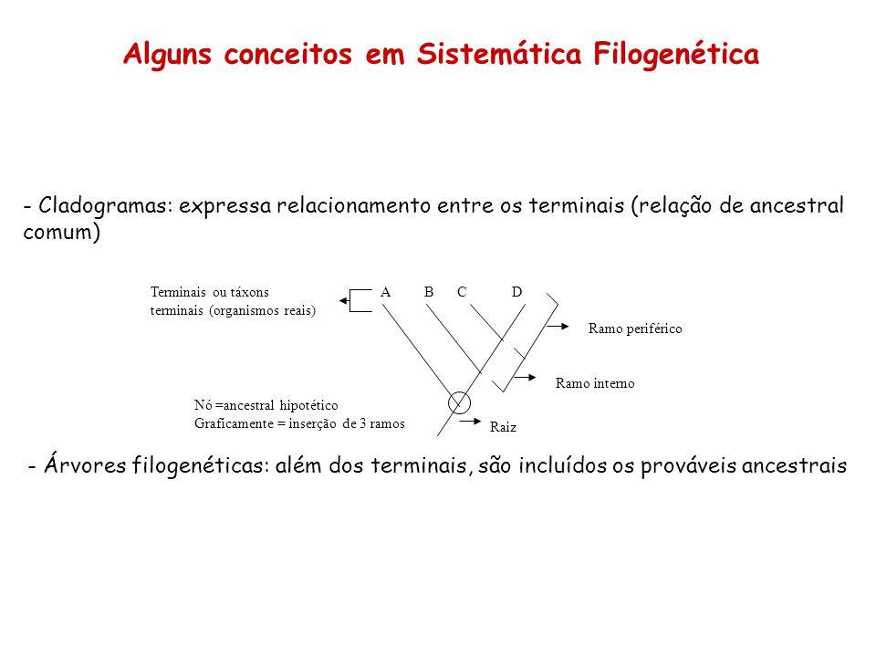 - Cladogramas: expressa relacionamento entre os terminais (relação de ancestral comum) Ramo periférico Ramo interno Raiz Nó =ancestral hipotético Graf