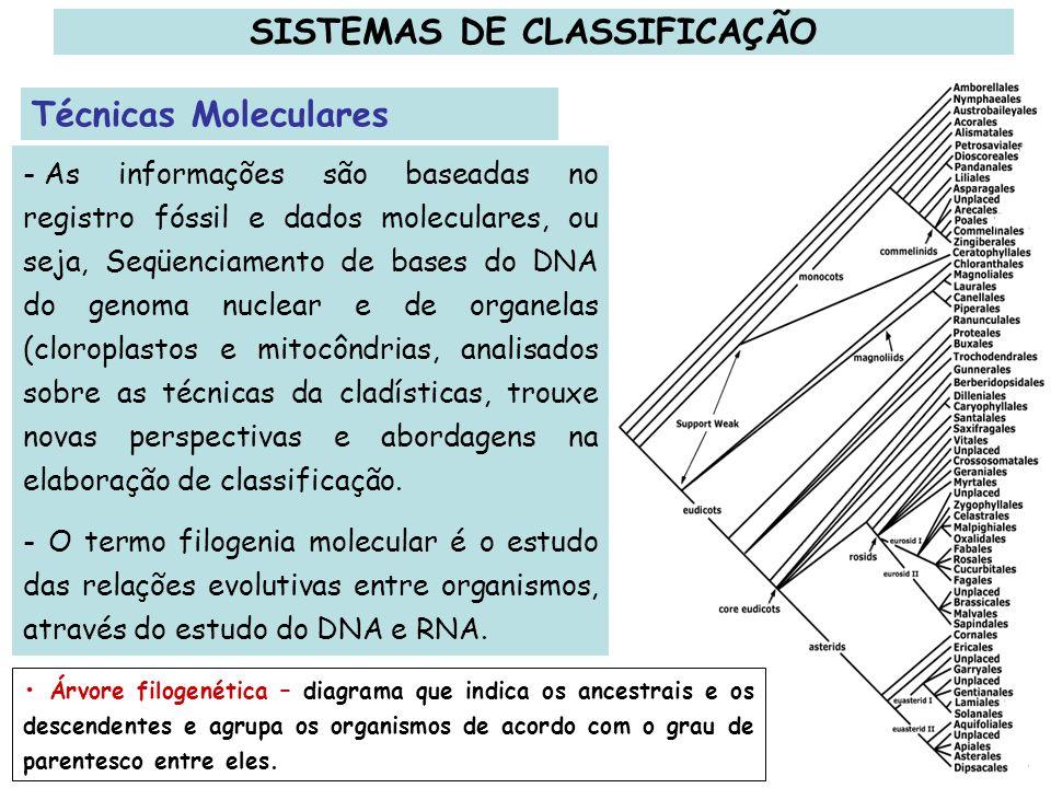 - As informações são baseadas no registro fóssil e dados moleculares, ou seja, Seqüenciamento de bases do DNA do genoma nuclear e de organelas (clorop