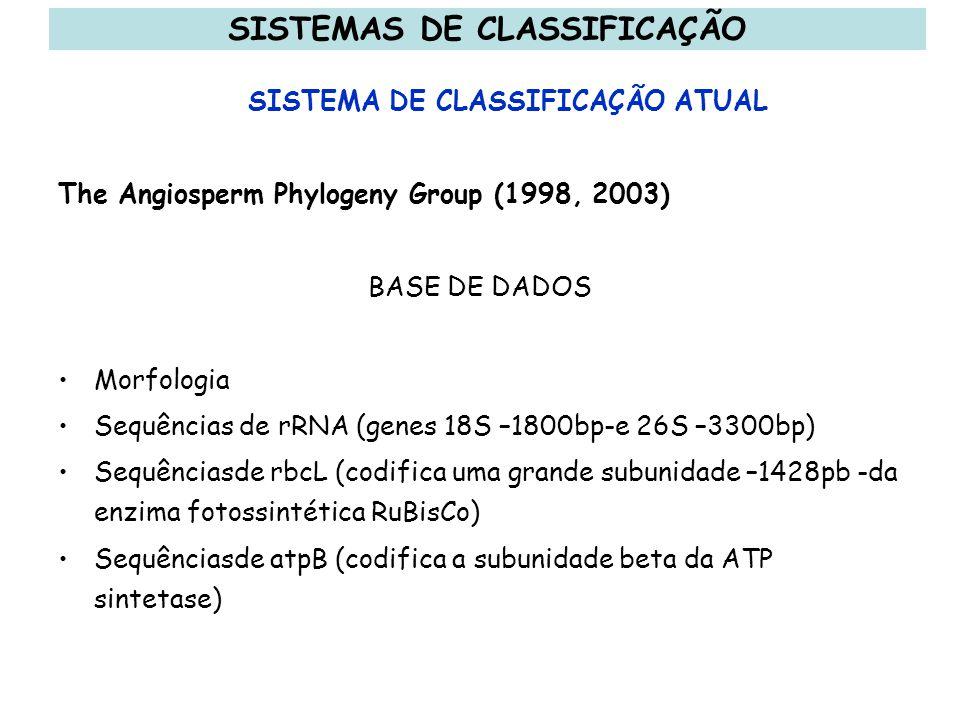 The Angiosperm Phylogeny Group (1998, 2003) BASE DE DADOS Morfologia Sequências de rRNA (genes 18S –1800bp-e 26S –3300bp) Sequênciasde rbcL (codifica
