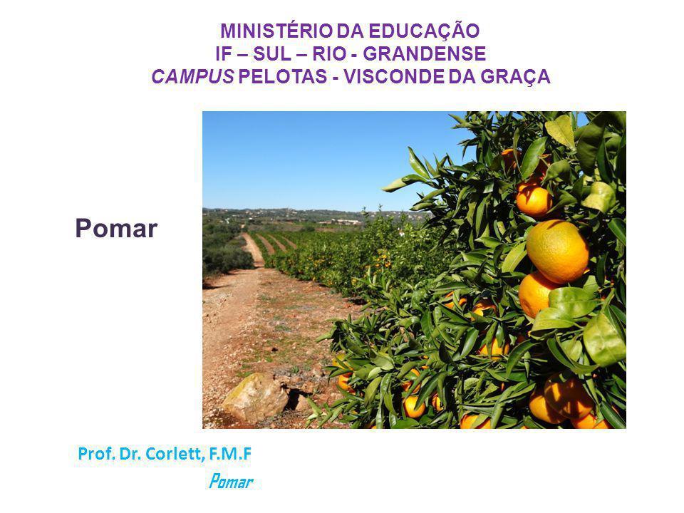 MINISTÉRIO DA EDUCAÇÃO IF – SUL – RIO - GRANDENSE CAMPUS PELOTAS - VISCONDE DA GRAÇA Prof. Dr. Corlett, F.M.F Pomar