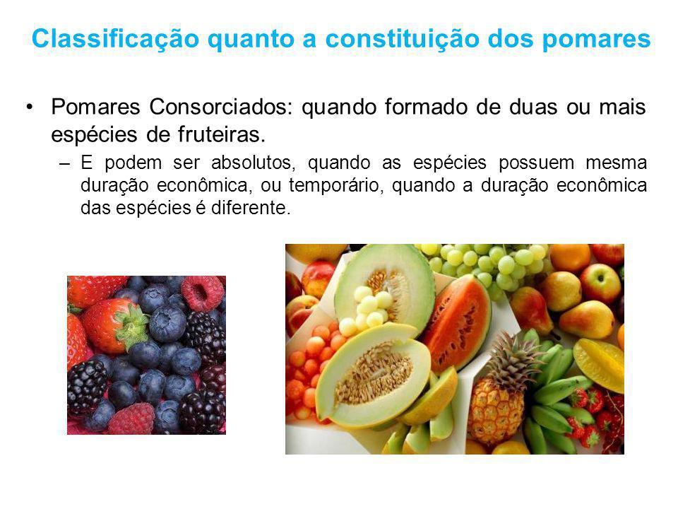 Classificação quanto a constituição dos pomares Pomares Consorciados: quando formado de duas ou mais espécies de fruteiras. –E podem ser absolutos, qu
