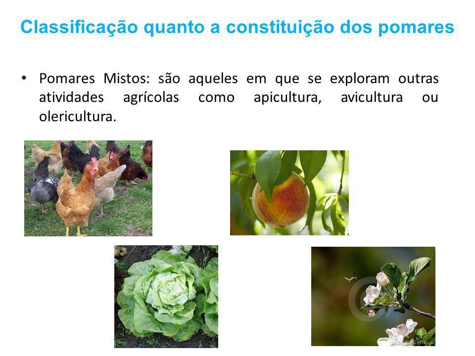Classificação quanto a constituição dos pomares Pomares Mistos: são aqueles em que se exploram outras atividades agrícolas como apicultura, avicultura