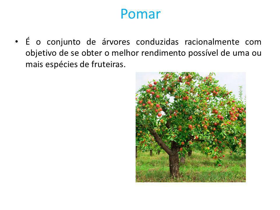 É o conjunto de árvores conduzidas racionalmente com objetivo de se obter o melhor rendimento possível de uma ou mais espécies de fruteiras.