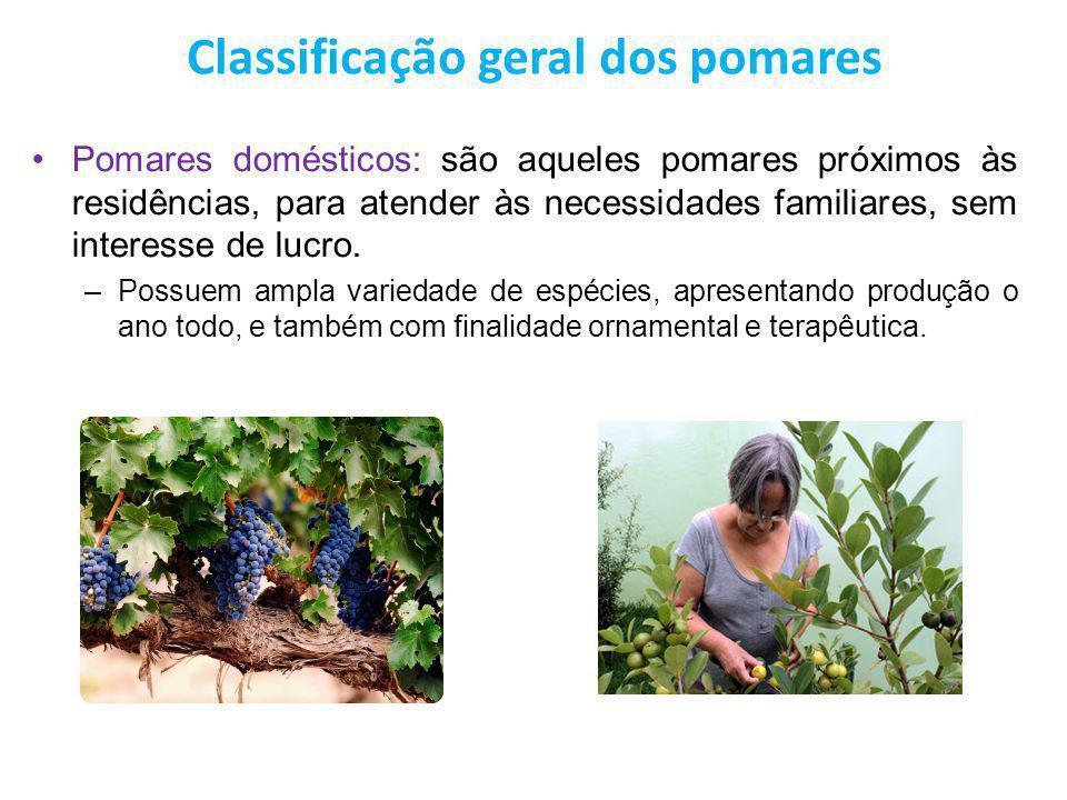 Classificação geral dos pomares Pomares domésticos: são aqueles pomares próximos às residências, para atender às necessidades familiares, sem interess