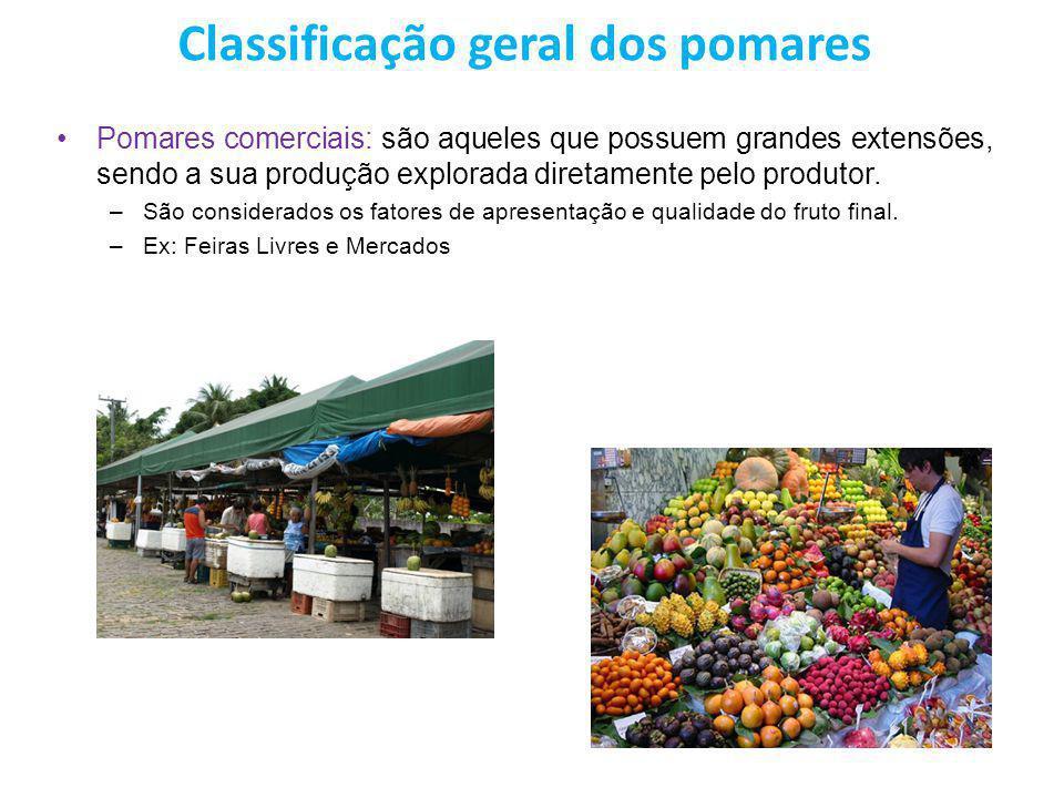 Classificação geral dos pomares Pomares comerciais: são aqueles que possuem grandes extensões, sendo a sua produção explorada diretamente pelo produto