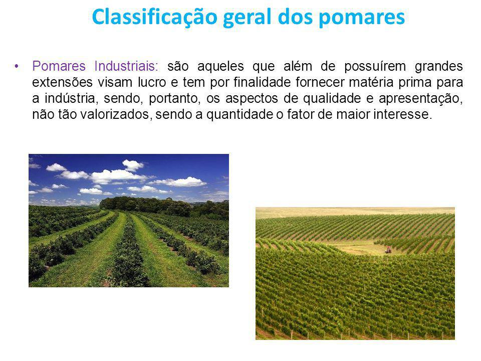 Classificação geral dos pomares Pomares Industriais: são aqueles que além de possuírem grandes extensões visam lucro e tem por finalidade fornecer mat