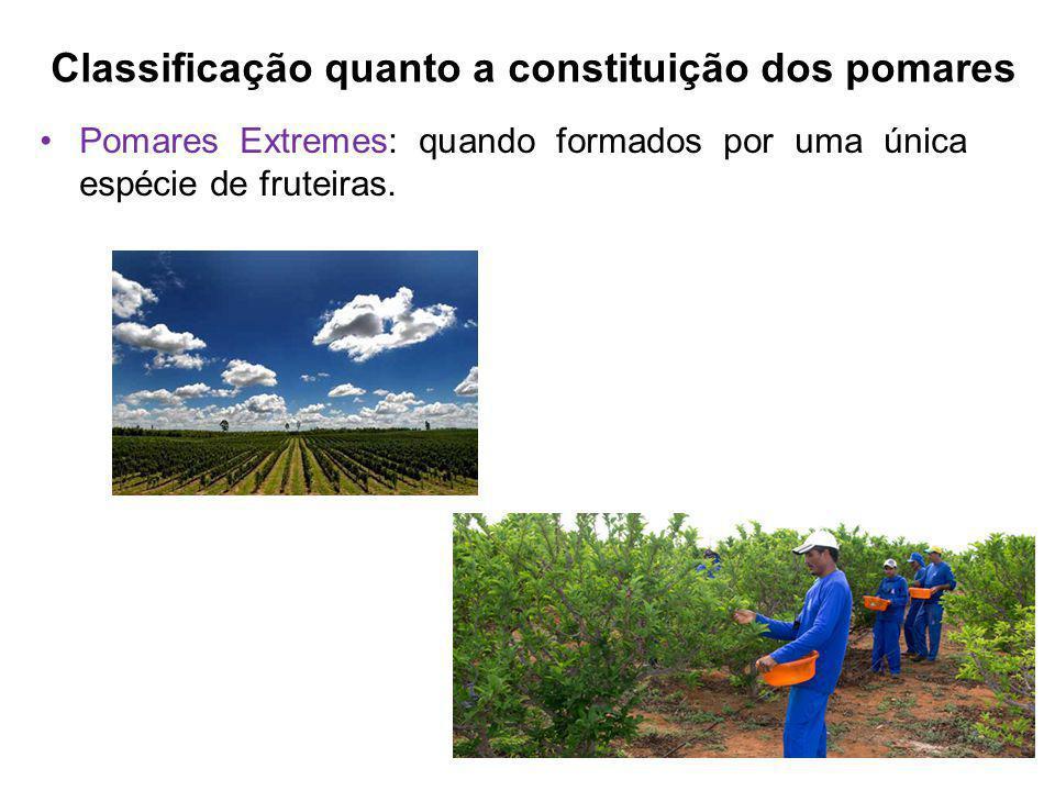 Classificação quanto a constituição dos pomares Pomares Extremes: quando formados por uma única espécie de fruteiras.
